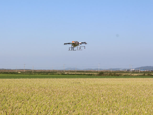 Photo of the drones flying over the rice fields.